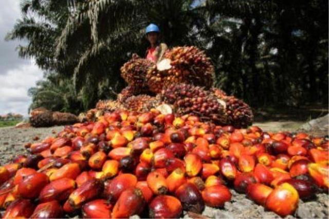 nyers mezőgazdasági olaj főzéshez és biodízel